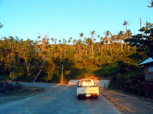 Leyte hills palm trees not recovered from typhoon
